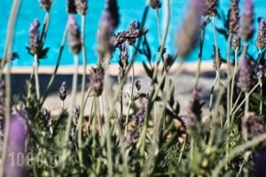 Verina Suites_best deals_Hotel_Cyclades Islands_Sifnos_Sifnos Chora