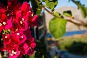Studio Thea_best deals_Hotel_Ionian Islands_Kefalonia_Kefalonia'st Areas