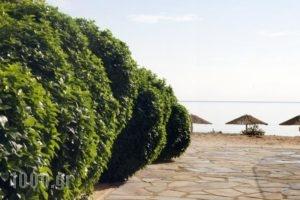 Iliorama Luxury Apartments_best deals_Apartment_Aegean Islands_Thasos_Chrysi Ammoudia