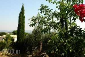 Musician'S Round House_lowest prices_in_Hotel_Ionian Islands_Corfu_Corfu Chora