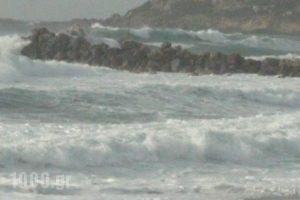 Kozas Studios_holidays_in_Hotel_Dodekanessos Islands_Rhodes_Stegna