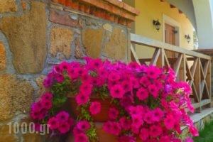 Trikalioti'S Estate_holidays_in_Hotel_Peloponesse_Ilia_Pyrgos