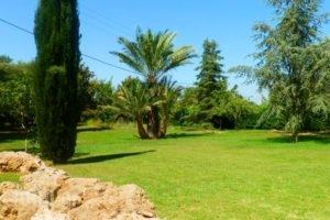 Trikalioti'S Estate_best prices_in_Hotel_Peloponesse_Ilia_Pyrgos