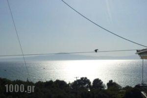 Villa Teo_lowest prices_in_Villa_Thessaly_Magnesia_Pilio Area