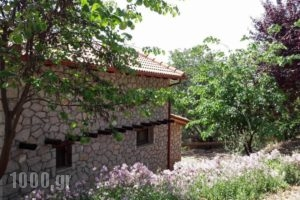 Tetrapolis_best prices_in_Hotel_Central Greece_Fokida_Amfissa
