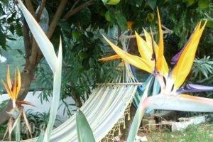 Seashell Apartments_lowest prices_in_Apartment_Crete_Chania_Platanias