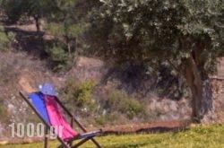 Villa Mitato Fodele in Mylopotamos, Rethymnon, Crete