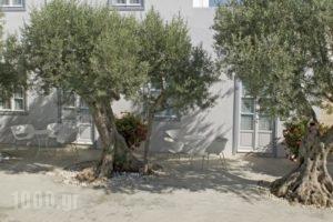 Orloff Resort_lowest prices_in_Hotel_Piraeus Islands - Trizonia_Spetses_Spetses Chora