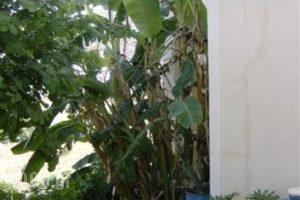 The Farm_lowest prices_in_Apartment_Cyclades Islands_Folegandros_Folegandros Chora