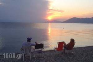 Georgiou Rooms & Apartments_holidays_in_Apartment_Central Greece_Evia_Rovies