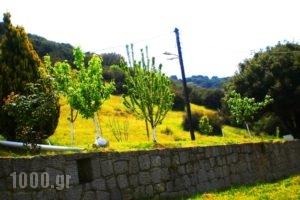 Xenonas Bizani_holidays_in_Apartment_Epirus_Ioannina_Bizani