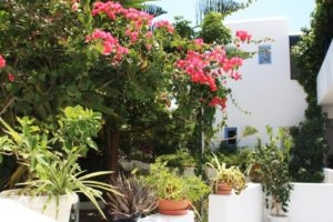 Loukia Apartments & Studios_travel_packages_in_Cyclades Islands_Paros_Paros Chora
