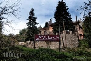 Xenonas Selas_accommodation_in_Room_Peloponesse_Korinthia_Evrostina
