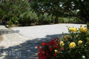 Korali_lowest prices_in_Hotel_Aegean Islands_Samos_Marathokambos