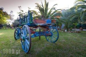 Villa Verde Fenia_holidays_in_Villa_Ionian Islands_Lefkada_Tsoukalades