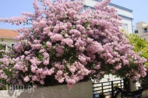 Kyknos_travel_packages_in_Ionian Islands_Kefalonia_Argostoli