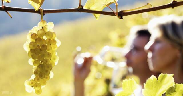 Wine tasting in Greece,Tourist guide, catalog and travel guide, catalogue in Greece,1000.gr